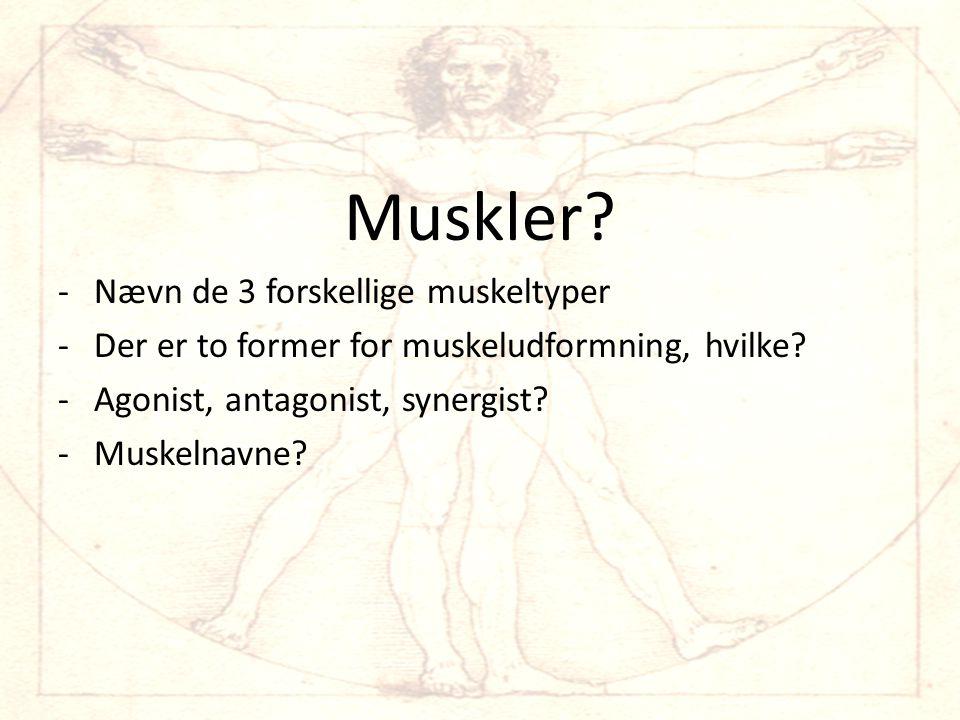 Muskler Nævn de 3 forskellige muskeltyper