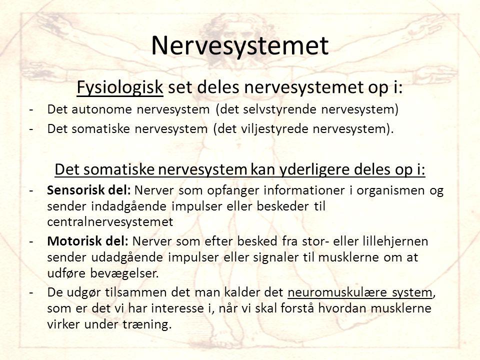 Nervesystemet Fysiologisk set deles nervesystemet op i: