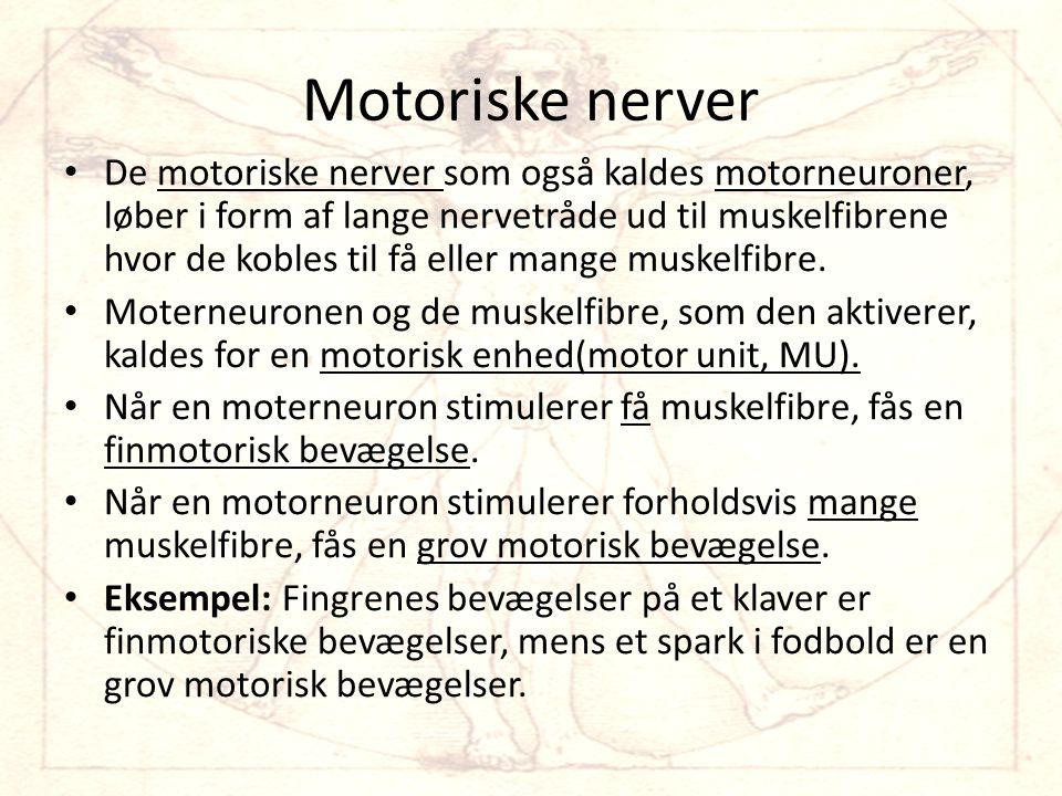 Motoriske nerver