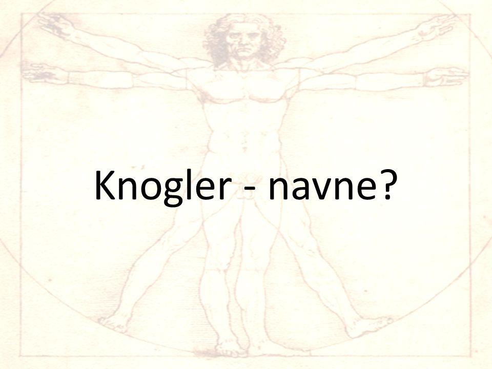 Knogler - navne