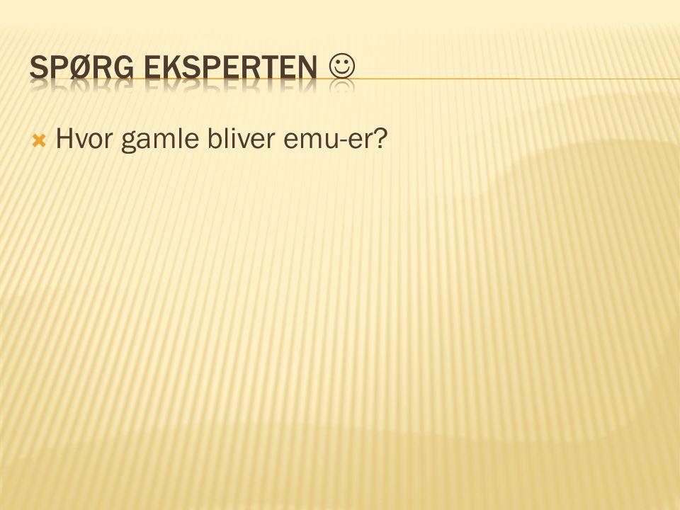 Spørg eksperten  Hvor gamle bliver emu-er