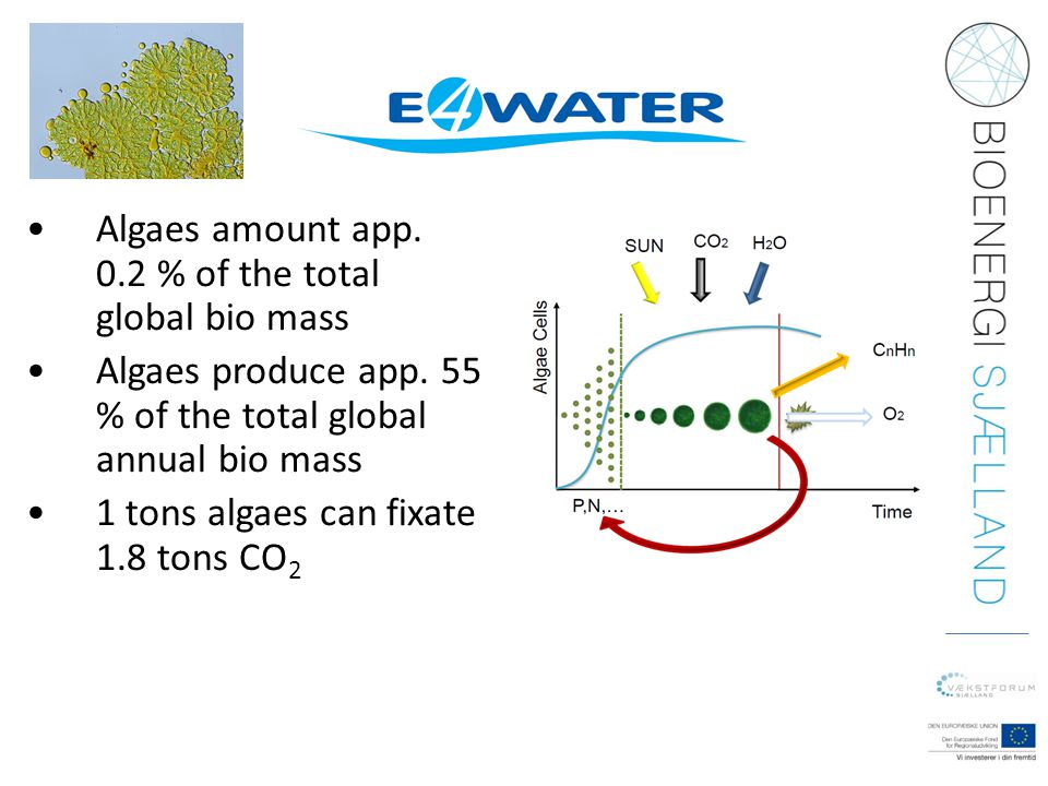 Algaes amount app. 0.2 % of the total global bio mass