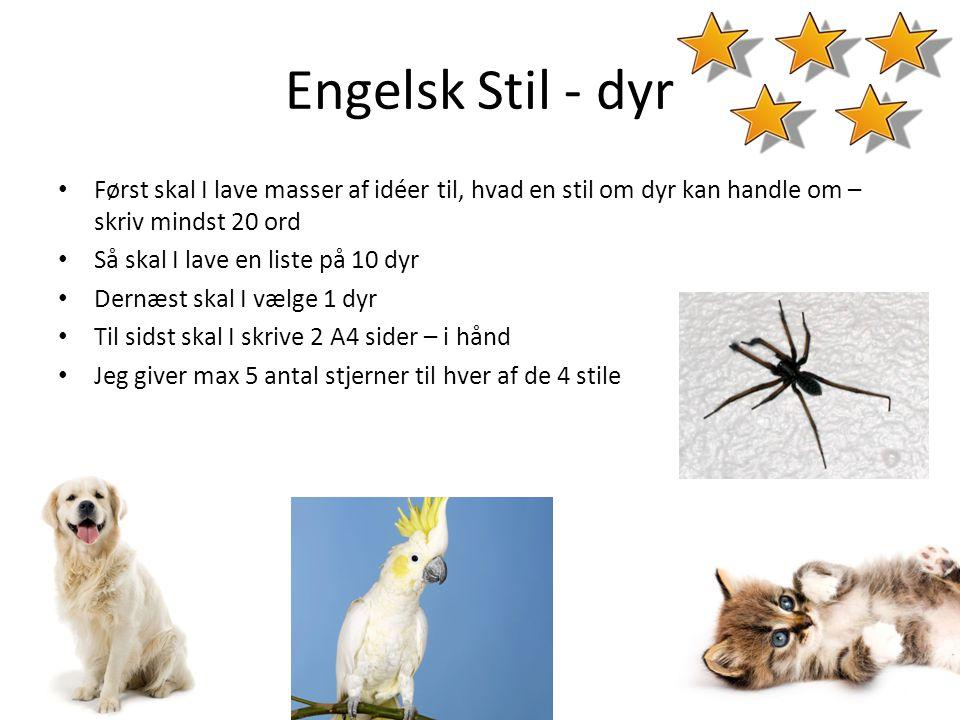 Engelsk Stil - dyr Først skal I lave masser af idéer til, hvad en stil om dyr kan handle om – skriv mindst 20 ord.