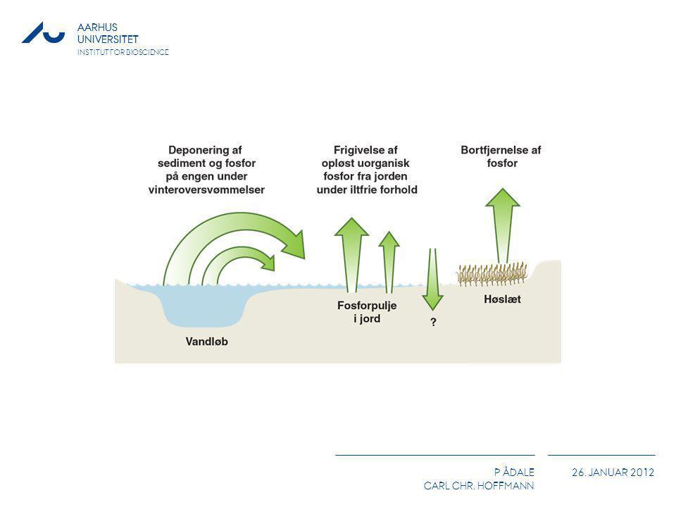 Principskitse over deponeringen og fjernelse/frigivelse af fosfor i forbindelse med oversvømmelse fra vandløb i en ureguleret ådal.