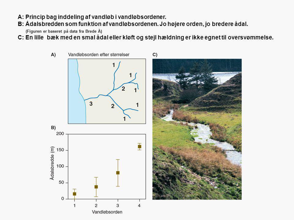 A: Princip bag inddeling af vandløb i vandløbsordener