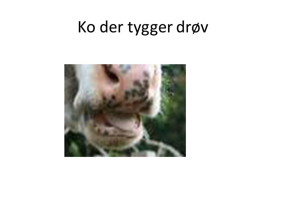 Ko der tygger drøv