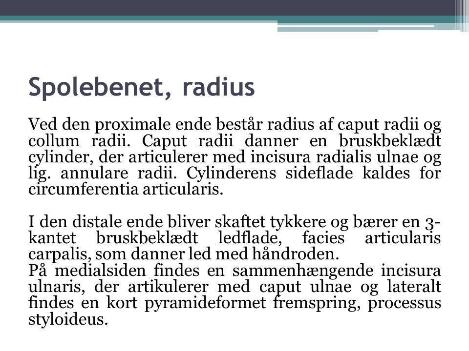 Spolebenet, radius