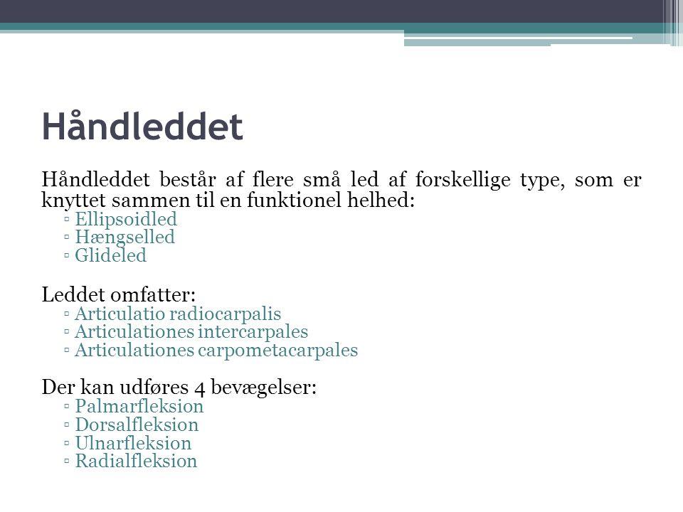Håndleddet Håndleddet består af flere små led af forskellige type, som er knyttet sammen til en funktionel helhed: