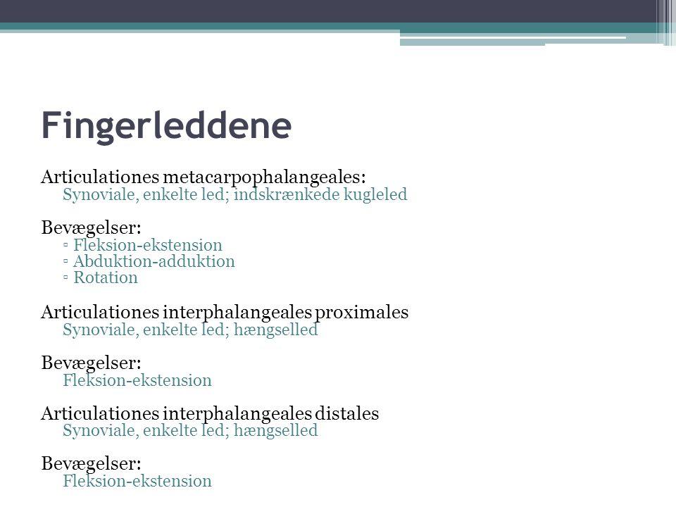Fingerleddene Articulationes metacarpophalangeales: Bevægelser: