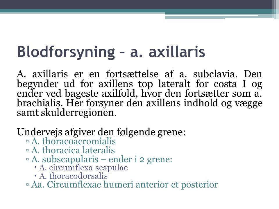 Blodforsyning – a. axillaris