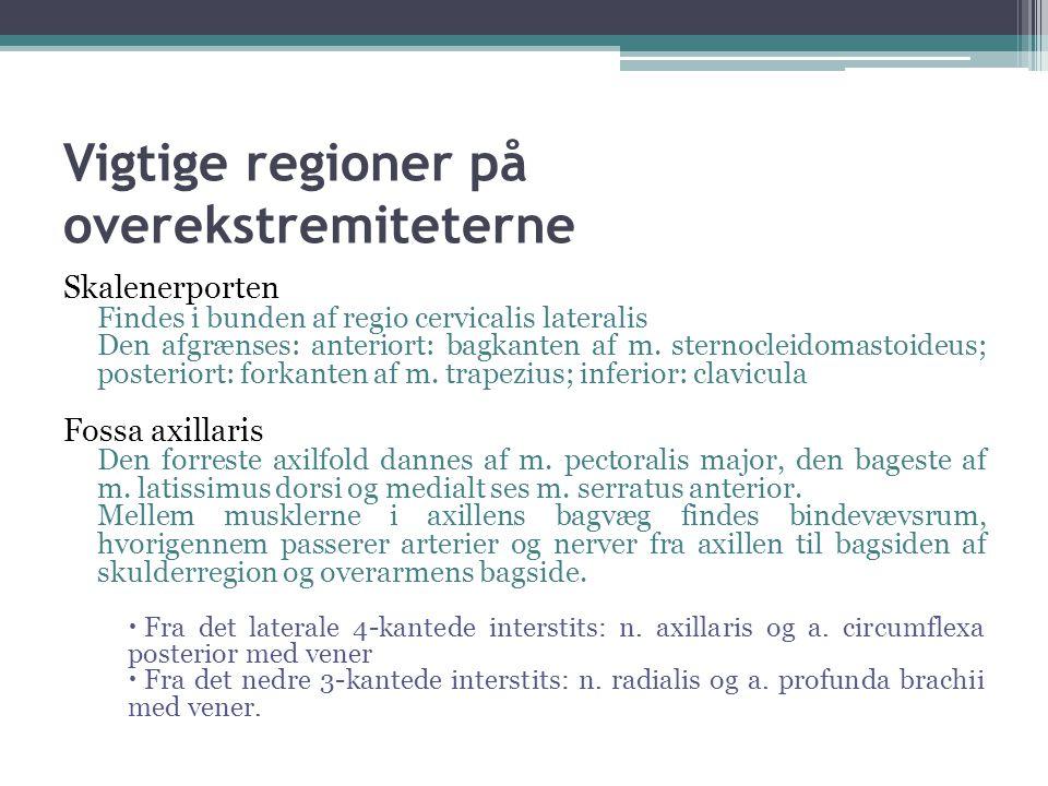 Vigtige regioner på overekstremiteterne