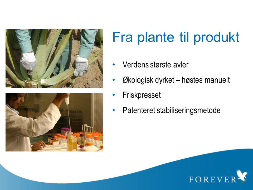 Fra plante til produkt Verdens største avler