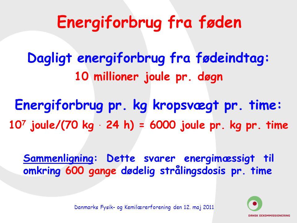 Energiforbrug fra føden