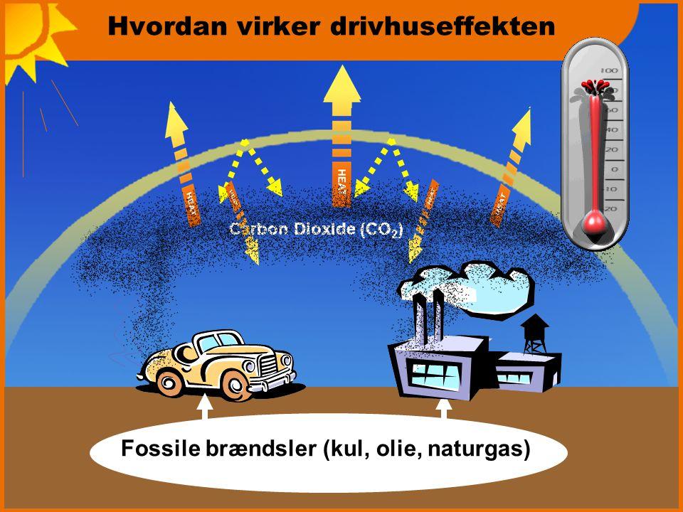 Hvordan virker drivhuseffekten