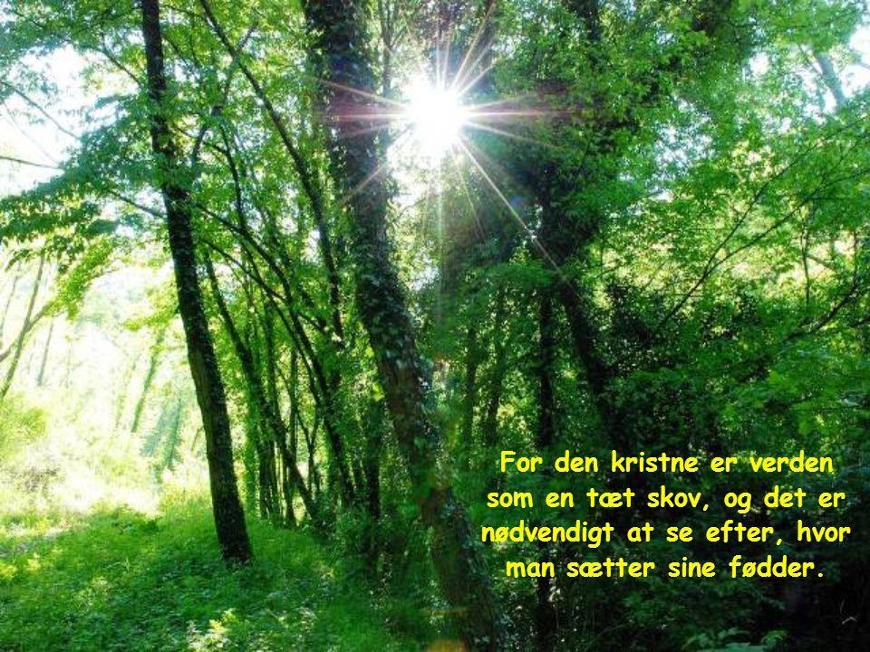 For den kristne er verden som en tæt skov, og det er nødvendigt at se efter, hvor man sætter sine fødder.
