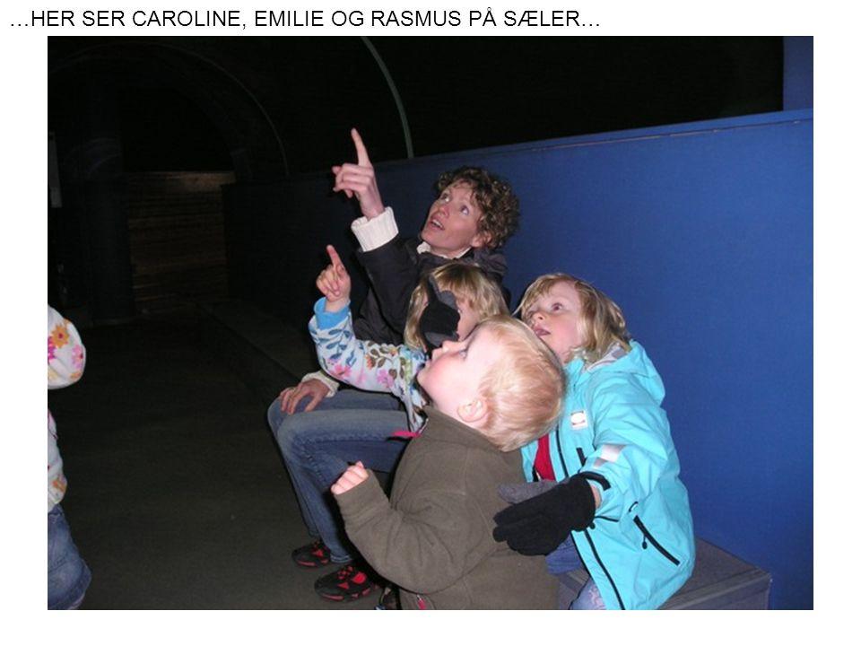 …HER SER CAROLINE, EMILIE OG RASMUS PÅ SÆLER…