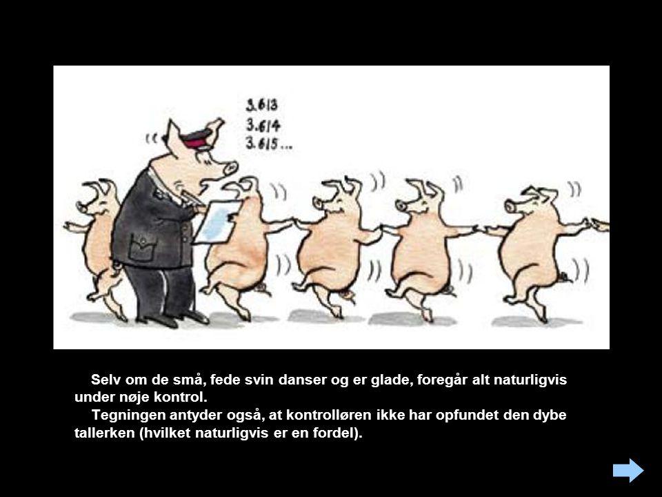 Selv om de små, fede svin danser og er glade, foregår alt naturligvis under nøje kontrol.