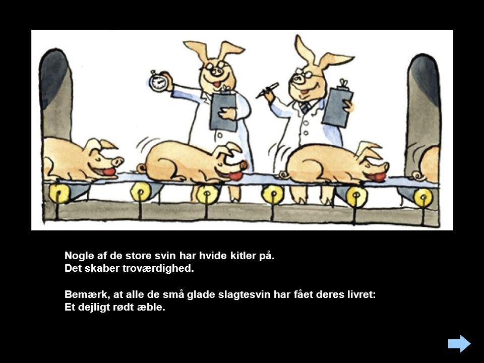 Nogle af de store svin har hvide kitler på. Det skaber troværdighed