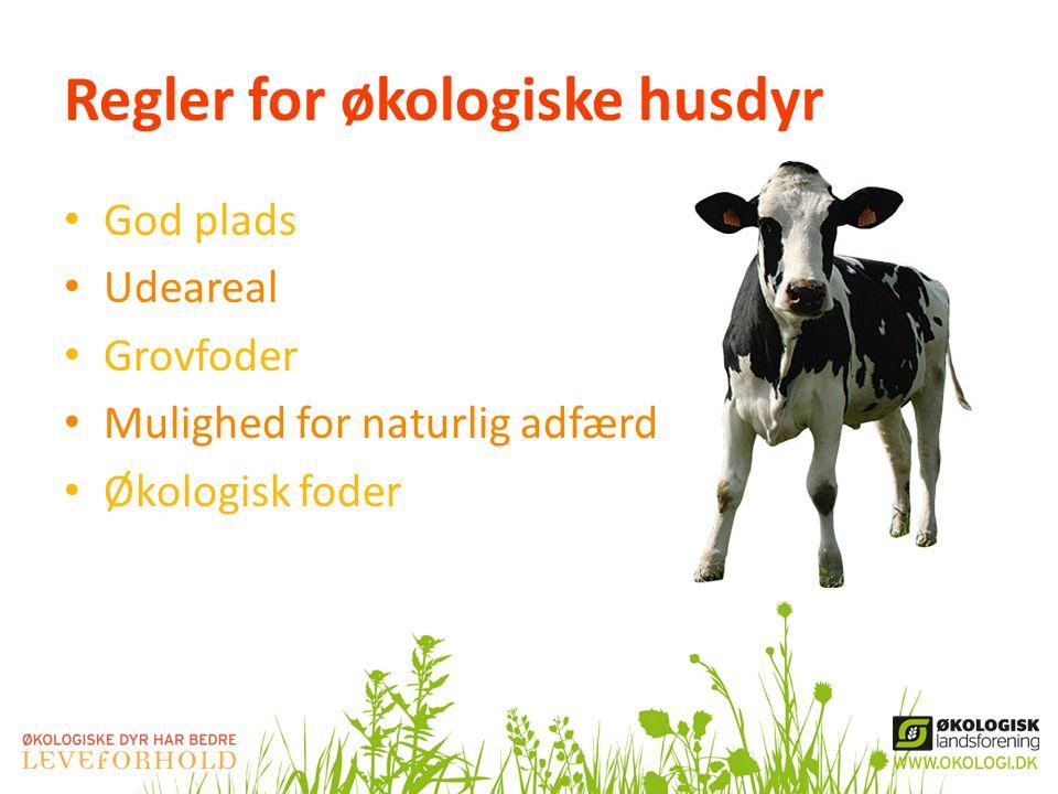 Regler for økologiske husdyr
