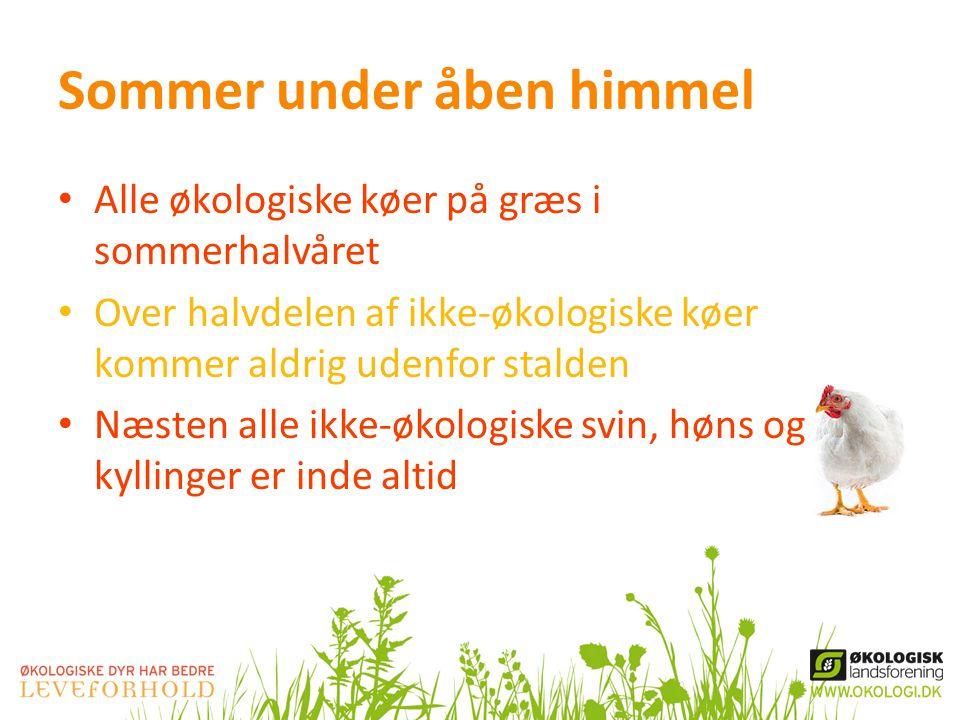 Sommer under åben himmel