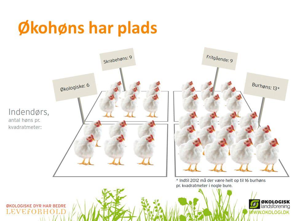 Økohøns har plads Kilde: www.altomokologi.dk og Landbrug og Fødevarer: http://www.danishmeat.dk/Husdyrproduktion/viden_om/Produktion%20af%20aeg.aspx.