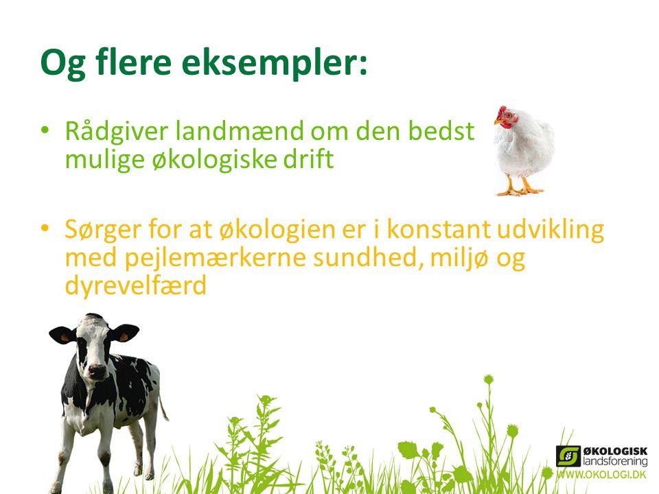 Og flere eksempler: Rådgiver landmænd om den bedst mulige økologiske drift.