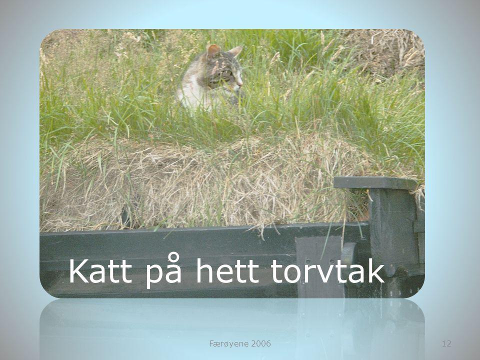 Katt på hett torvtak Færøyene 2006