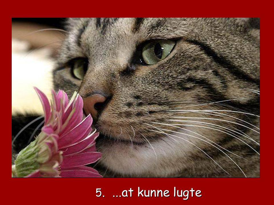 5. ...at kunne lugte