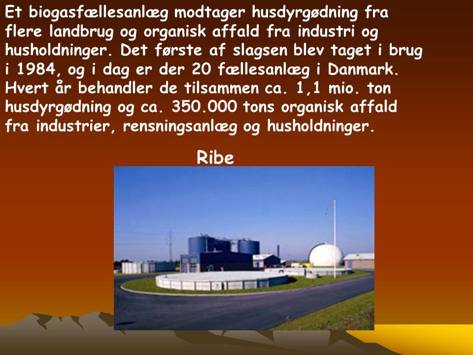 Et biogasfællesanlæg modtager husdyrgødning fra flere landbrug og organisk affald fra industri og husholdninger. Det første af slagsen blev taget i brug i 1984, og i dag er der 20 fællesanlæg i Danmark. Hvert år behandler de tilsammen ca. 1,1 mio. ton husdyrgødning og ca. 350.000 tons organisk affald fra industrier, rensningsanlæg og husholdninger.