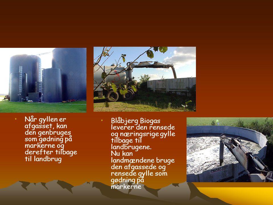 Når gyllen er afgasset, kan den genbruges som gødning på markerne og derefter tilbage til landbrug
