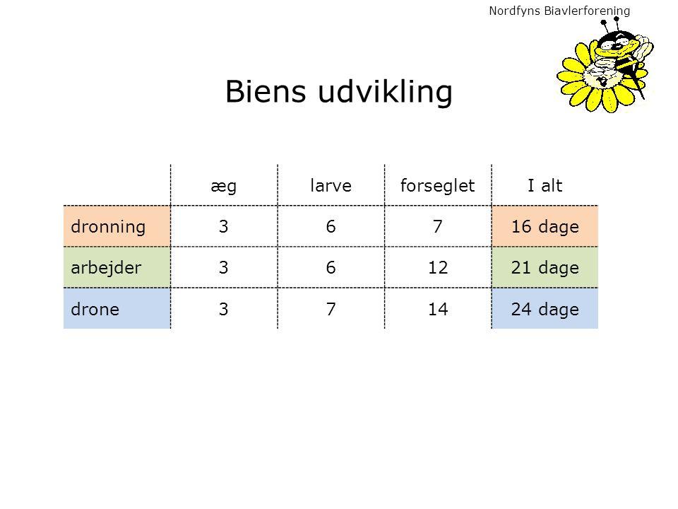 Biens udvikling æg larve forseglet I alt dronning 3 6 7 16 dage