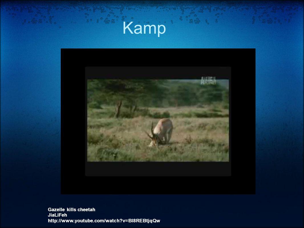 Kamp Gazelle kills cheetah JiaLiFeh