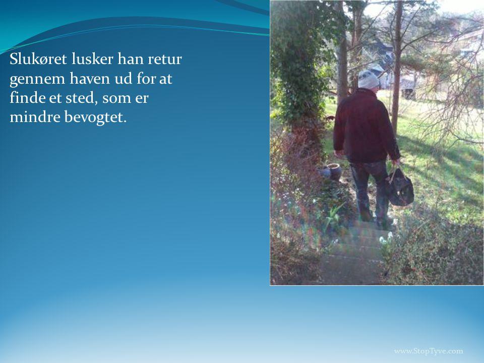 Slukøret lusker han retur gennem haven ud for at finde et sted, som er mindre bevogtet.