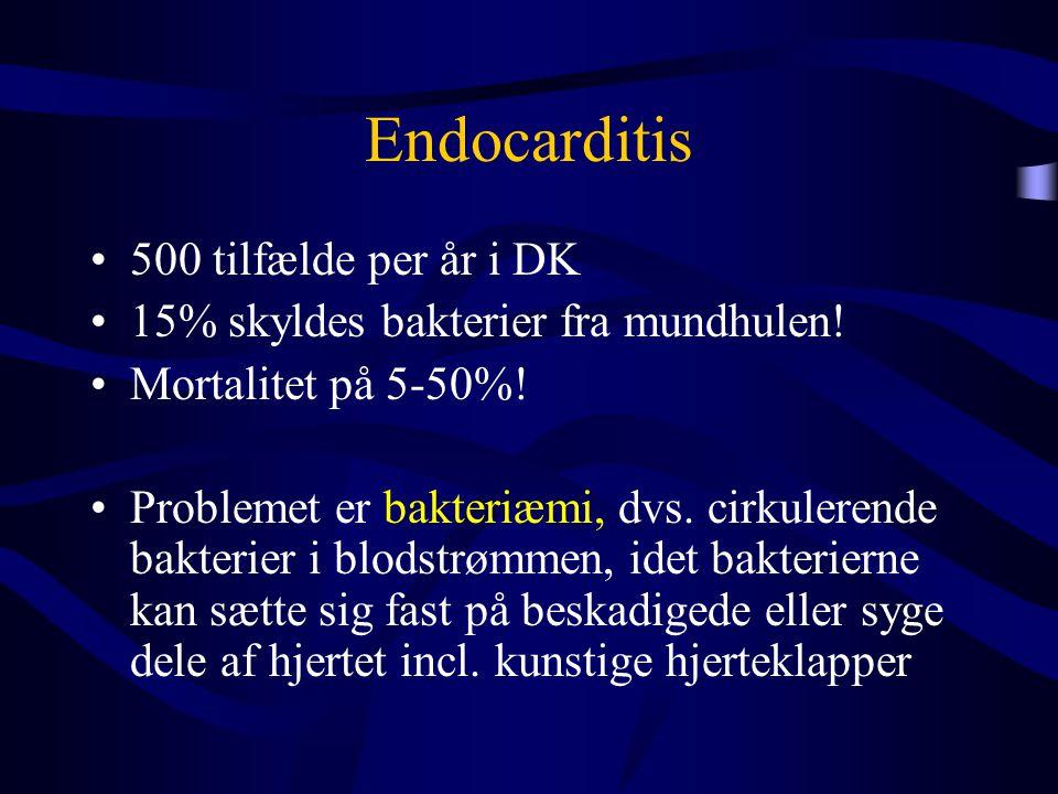 Endocarditis 500 tilfælde per år i DK