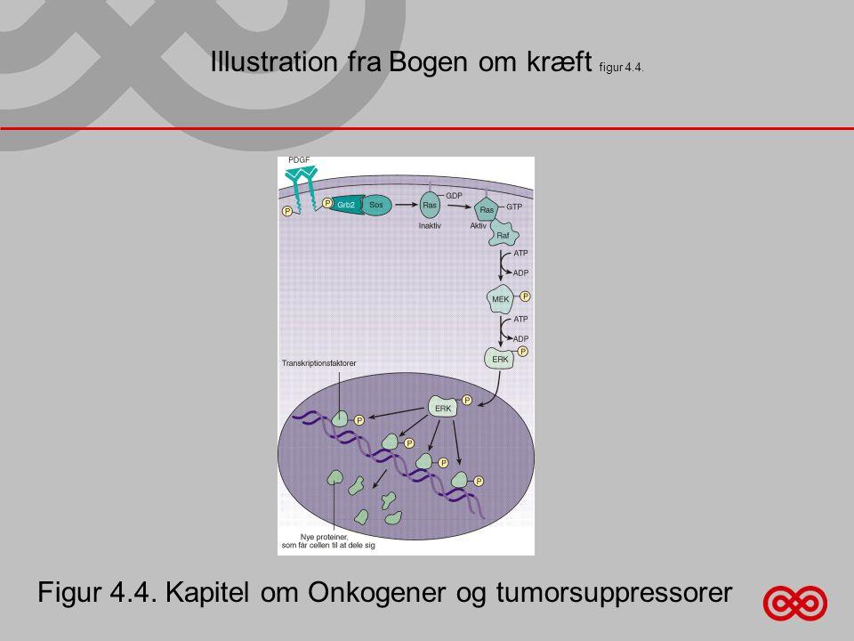 Illustration fra Bogen om kræft figur 4.4.