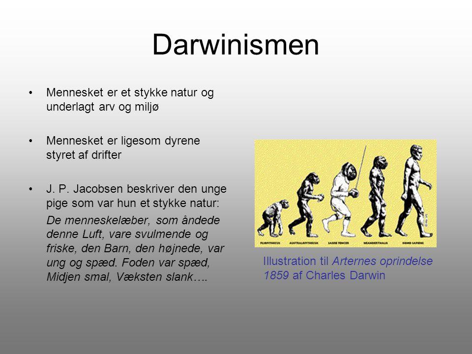 Darwinismen Mennesket er et stykke natur og underlagt arv og miljø