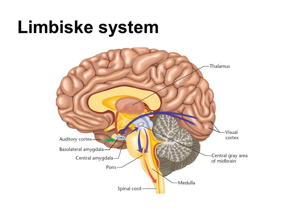 Limbiske system