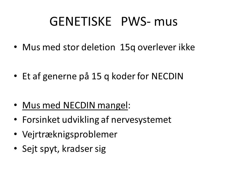 GENETISKE PWS- mus Mus med stor deletion 15q overlever ikke