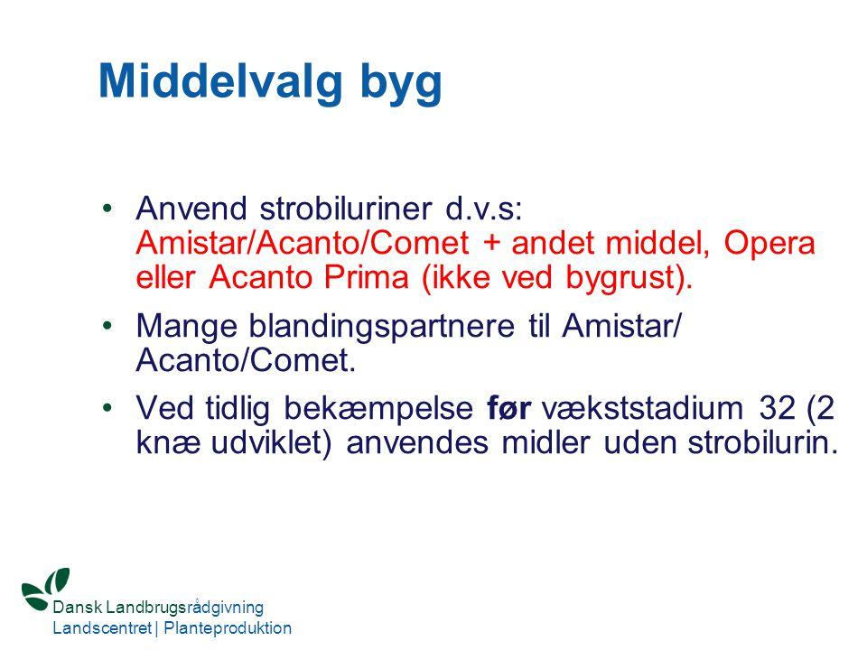 Middelvalg byg Anvend strobiluriner d.v.s: Amistar/Acanto/Comet + andet middel, Opera eller Acanto Prima (ikke ved bygrust).