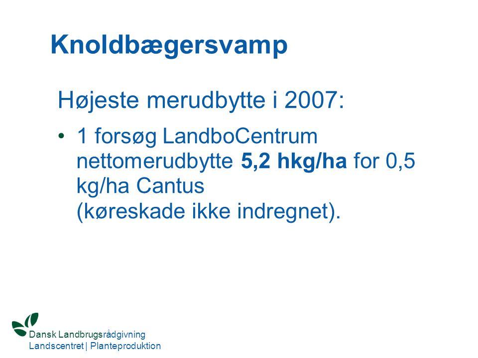 Knoldbægersvamp Højeste merudbytte i 2007: