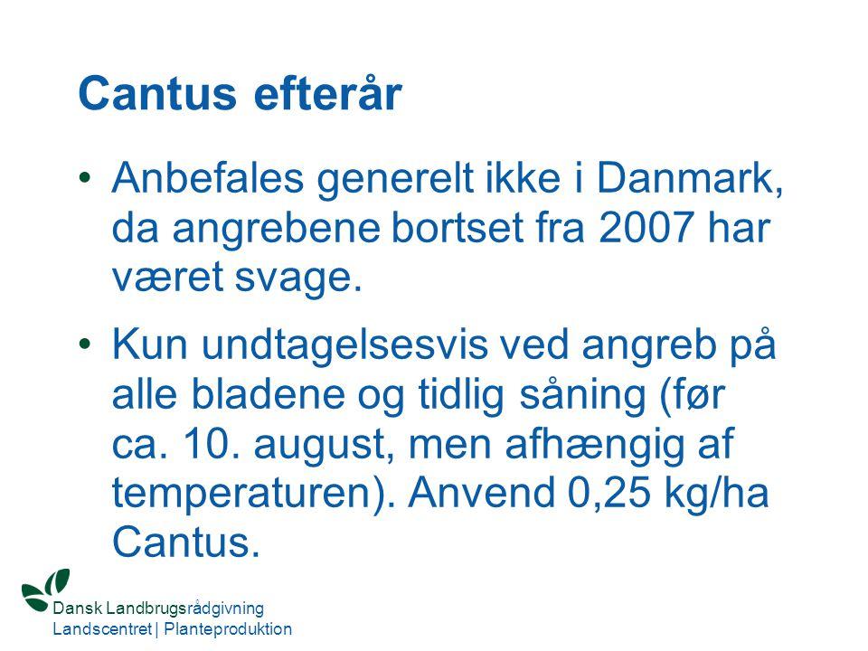 Cantus efterår Anbefales generelt ikke i Danmark, da angrebene bortset fra 2007 har været svage.