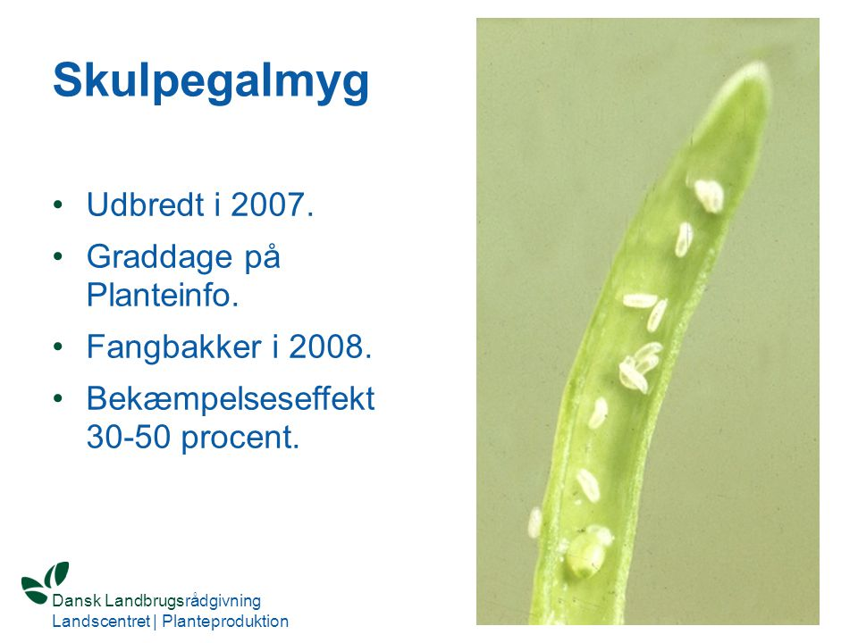 Skulpegalmyg Udbredt i 2007. Graddage på Planteinfo.