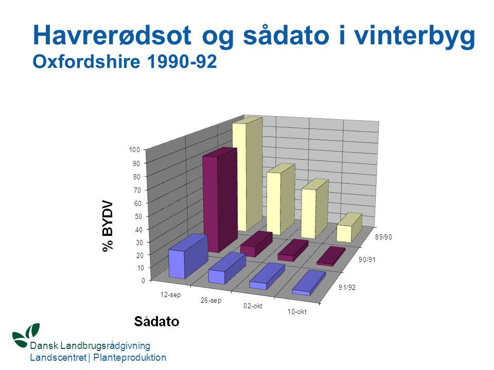Havrerødsot og sådato i vinterbyg Oxfordshire 1990-92