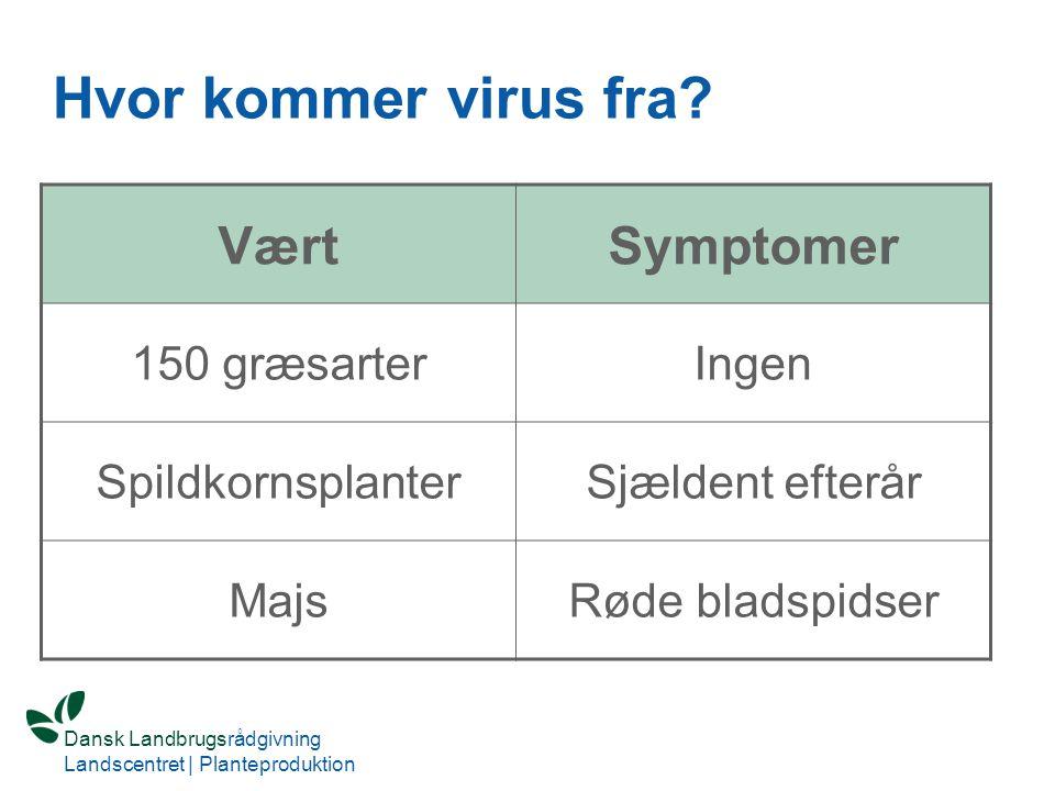 Hvor kommer virus fra Vært Symptomer 150 græsarter Ingen