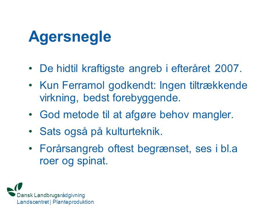 Agersnegle De hidtil kraftigste angreb i efteråret 2007.