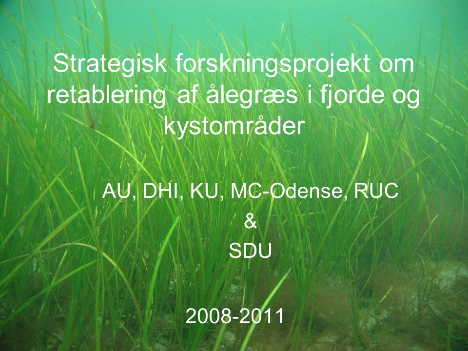 Strategisk forskningsprojekt om retablering af ålegræs i fjorde og kystområder