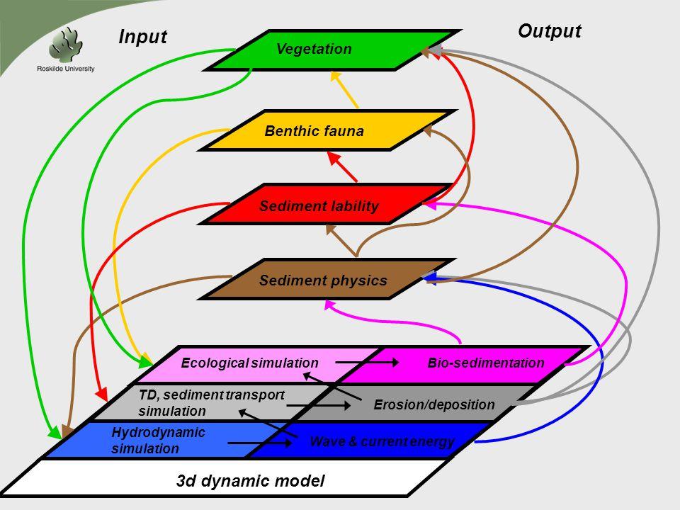 Output Input 3d dynamic model Vegetation Benthic fauna