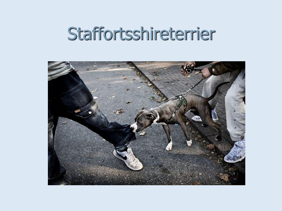 Staffortsshireterrier