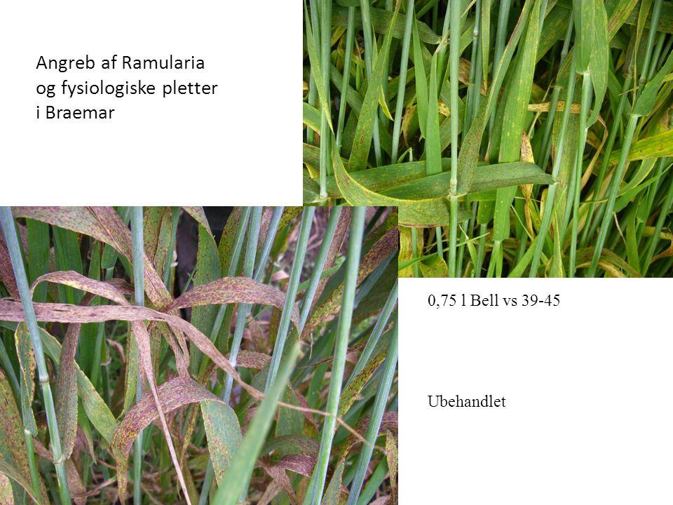 Angreb af Ramularia og fysiologiske pletter i Braemar