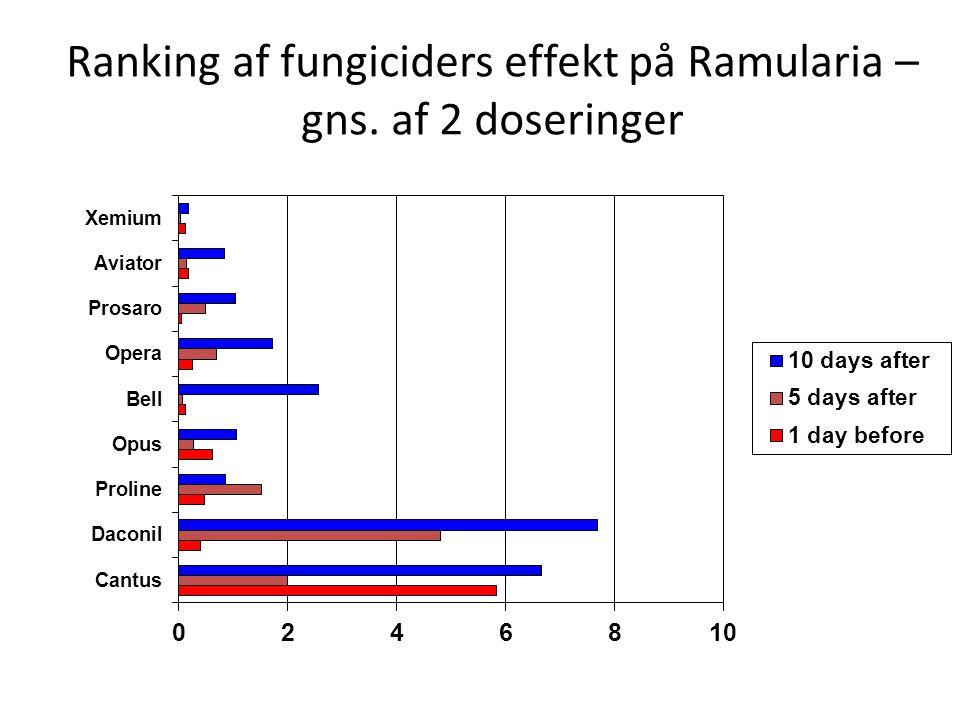 Ranking af fungiciders effekt på Ramularia – gns. af 2 doseringer